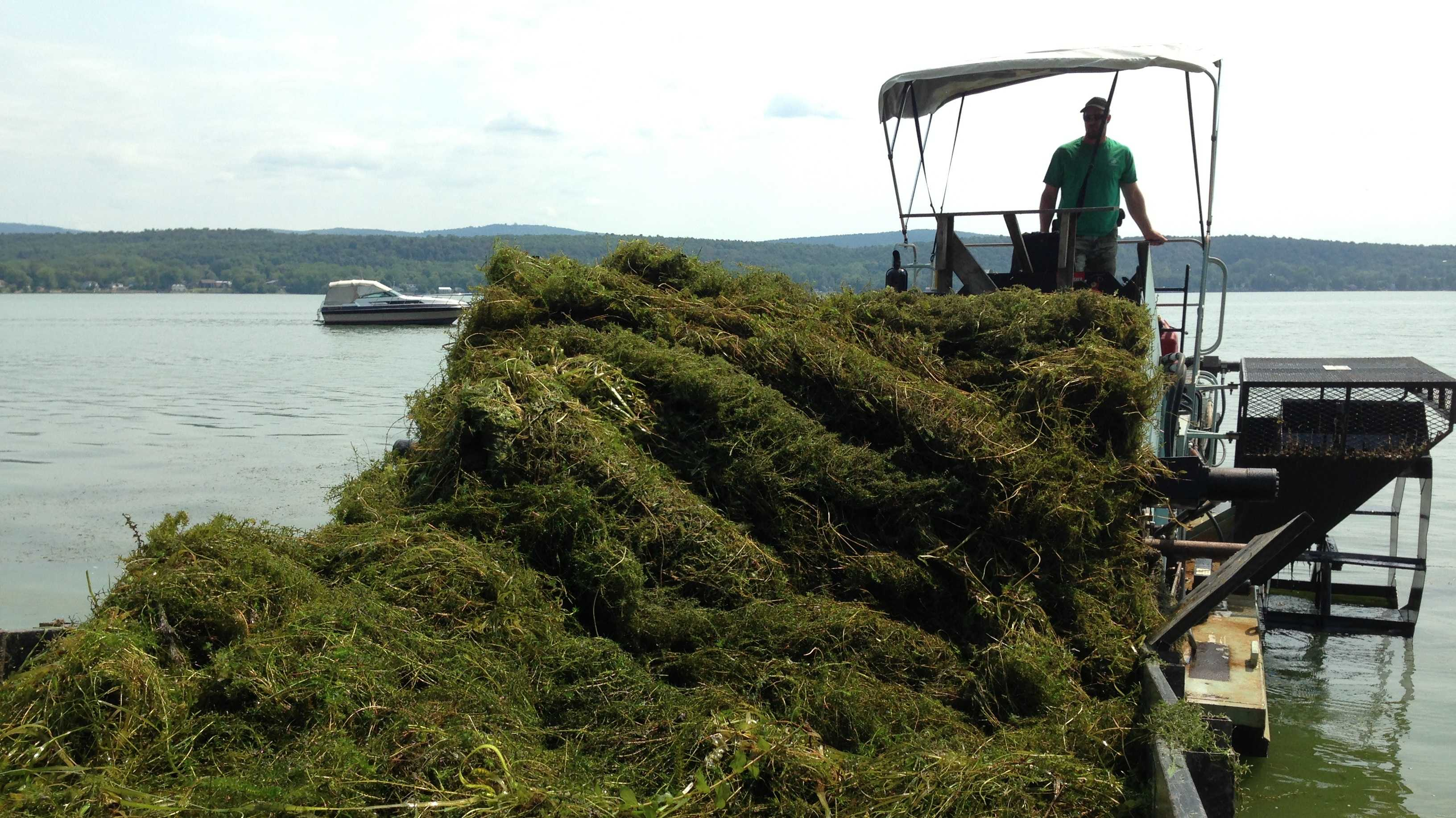 A special machine pulls mats of thick, decomposing weeds from St. Albans bay.