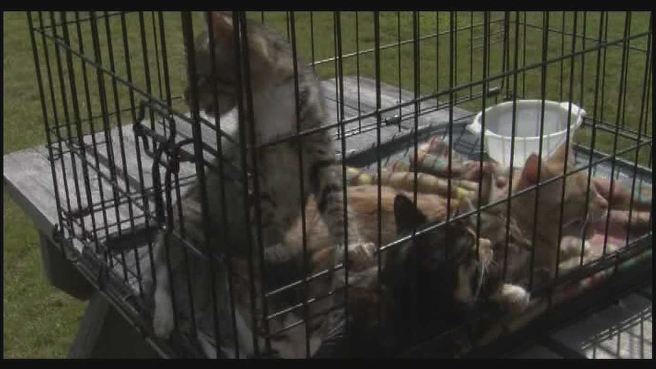 08-29-13 img-Local woman rescues dozens of abandoned kittens