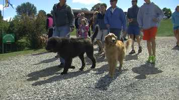 Dogs partied 1980s style at Shelburne Museum on Sunday, Sept. 8. The museum hosted its annual dog day to benefit local animal rescues and humane societies.