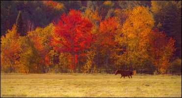 Horse in Fall by David Jennings.