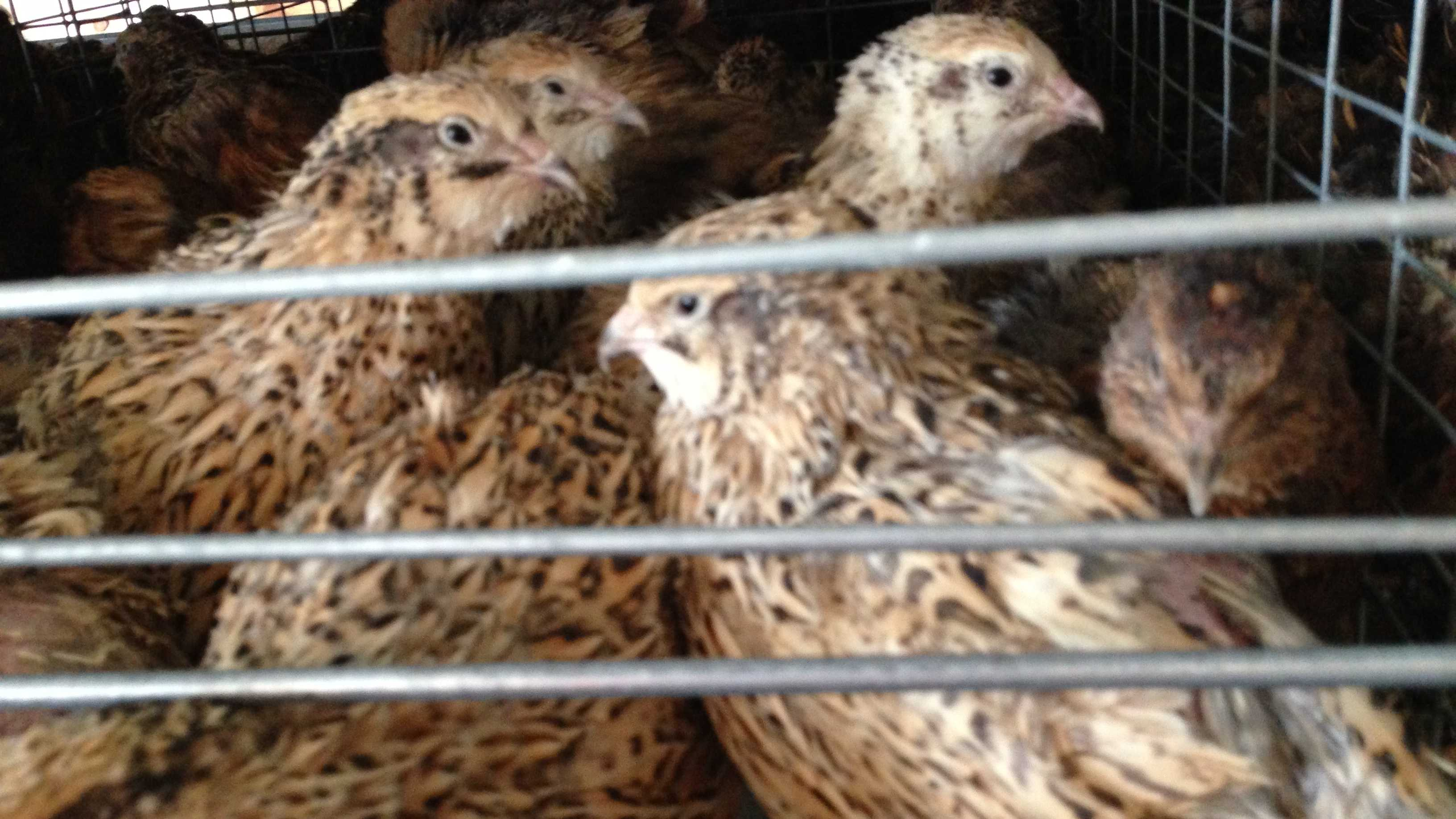 10-14 After fire killed 21,000 birds, Vt. poultry farm bouncing back - img 1