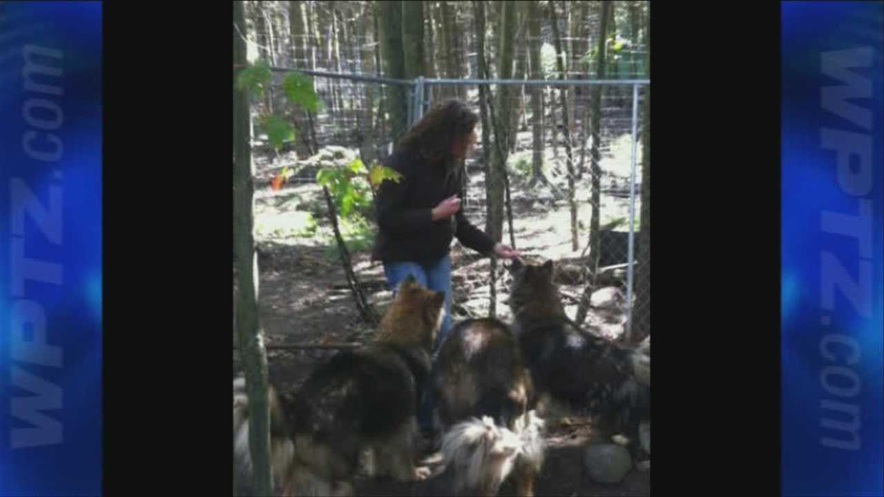 10-15 Four wolf-hybrid dogs waiting for their furever homes - img
