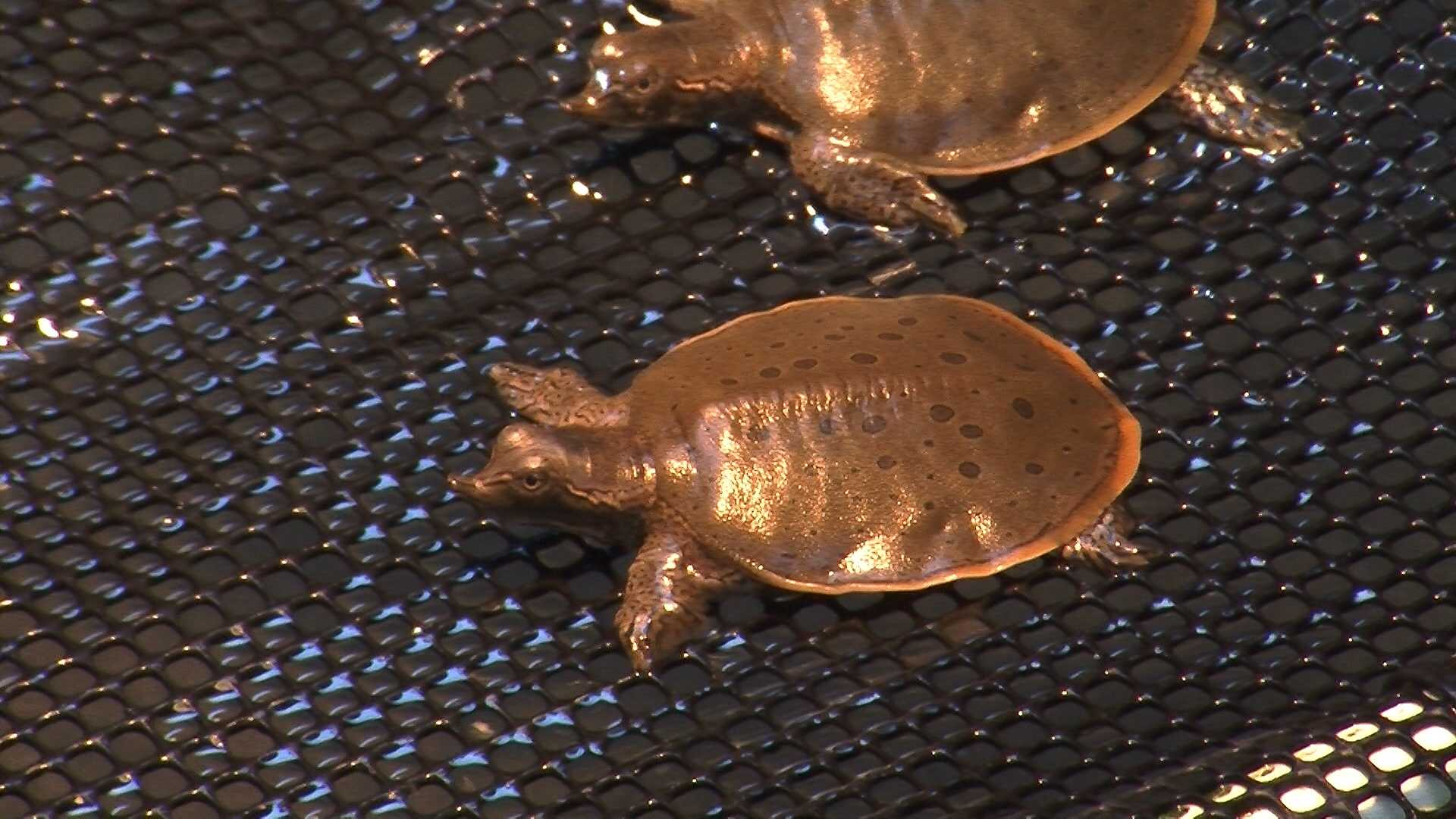 An aquarium receives a special delivery of babies that need some TLC.