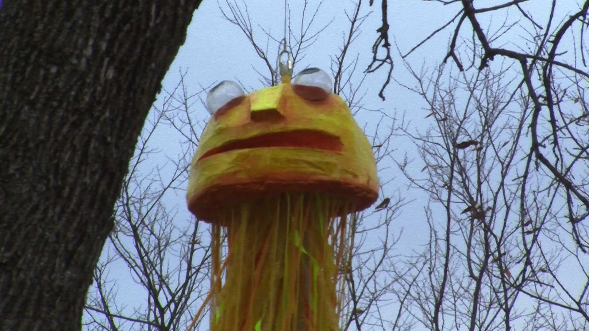 Have you seen them? Four large jellyfish hang in the trees outside of Burlington City Hall. They're part of a project by artist Abby Manock and are presented through Burlington City Arts.