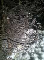 Ice forms on branches in Milton, Vermont.