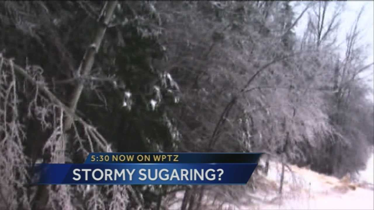 img-Ice storm hurts Maple trees