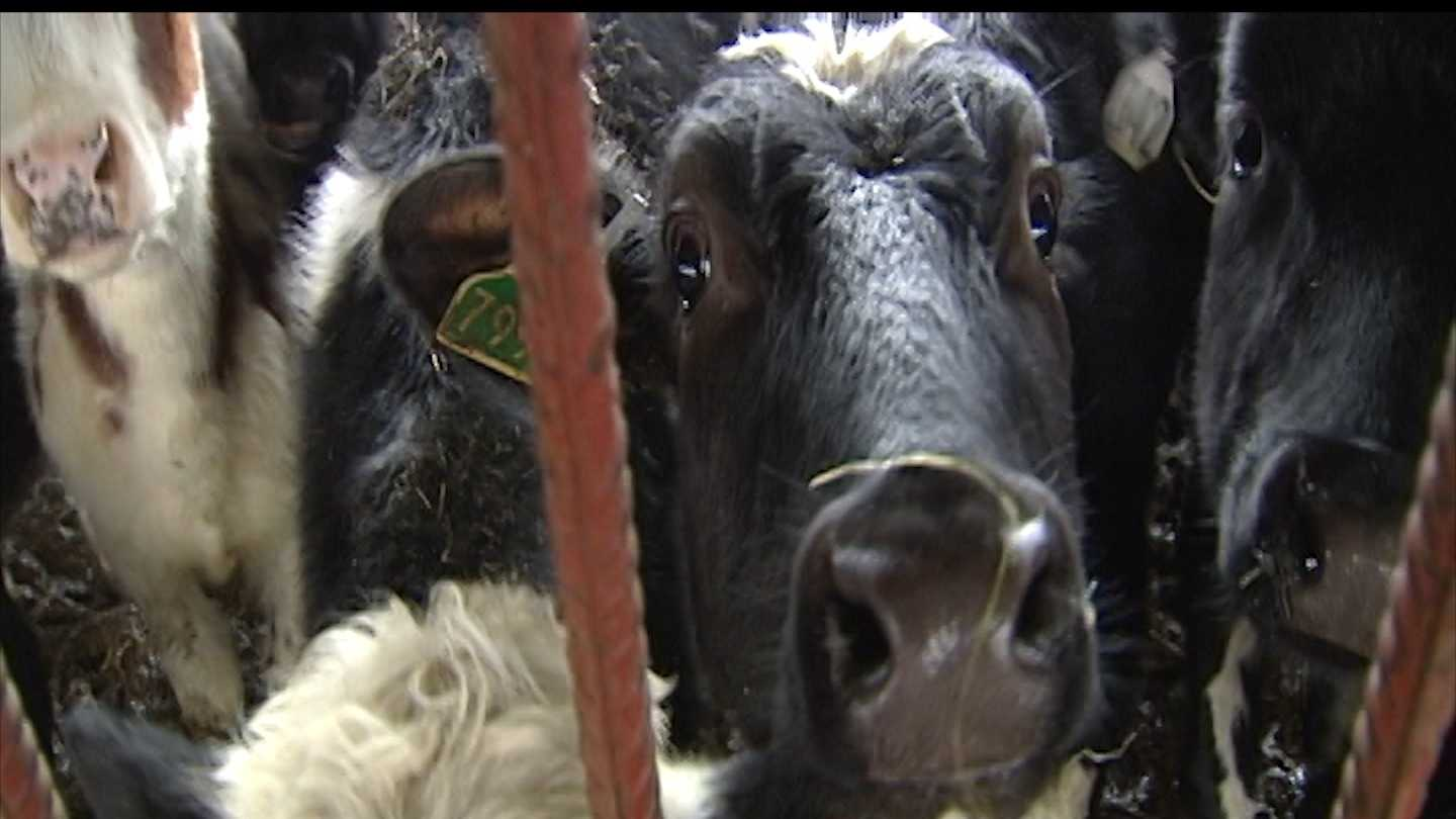 State and local agricultural officials kicked off a new grant program that aims to help Vermont dairy farmers on Monday.