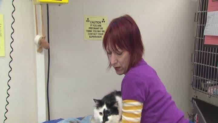 img-Cat who taunted family goes to therapy