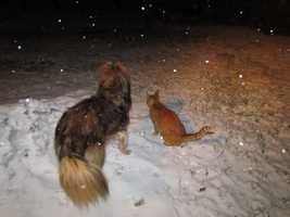 Trixie and Fred are a bit confused as snow coats their yard in Albany, Vt.