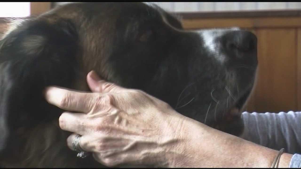 img-After great effort old dog finds new home