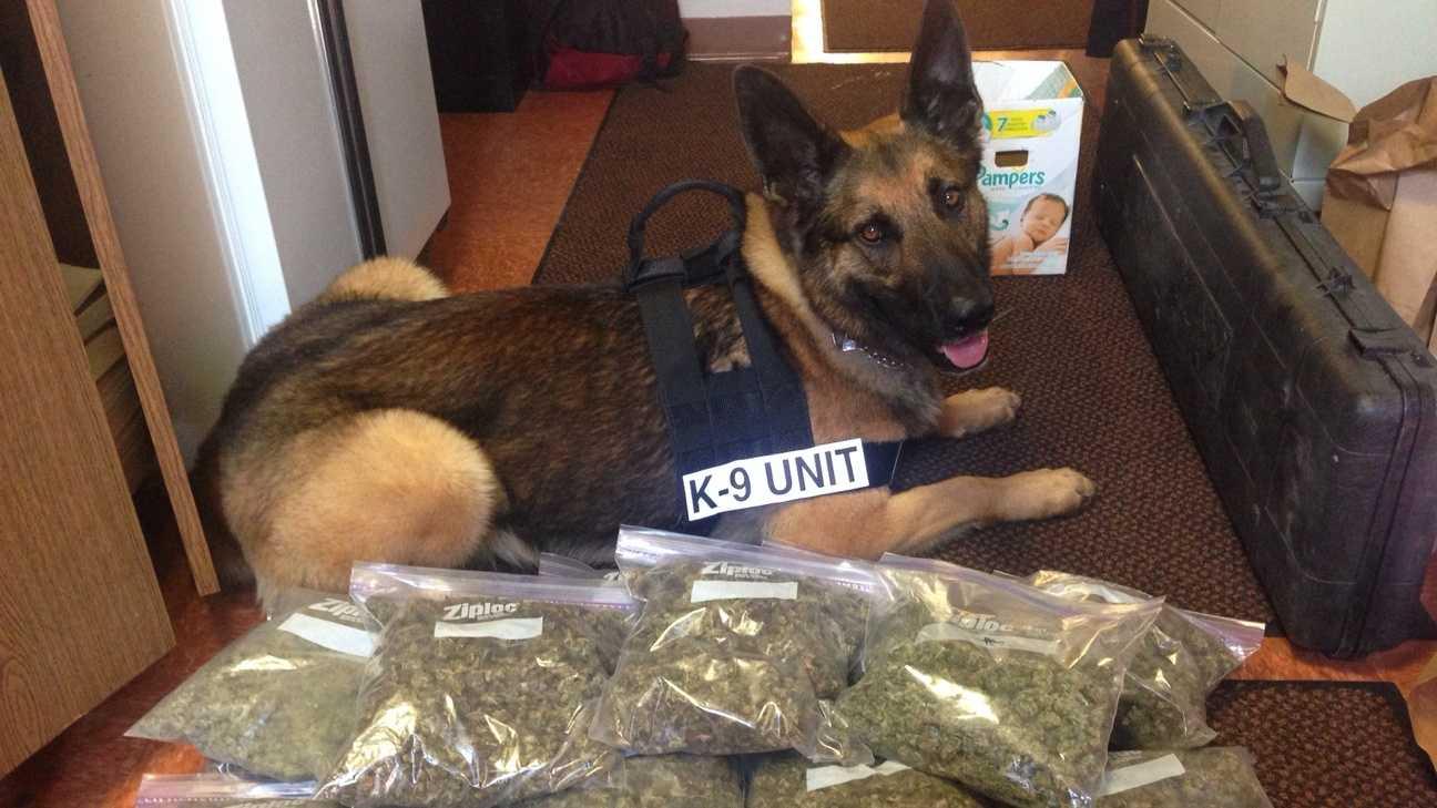 K-9 Beny Ward with the seized marijuana
