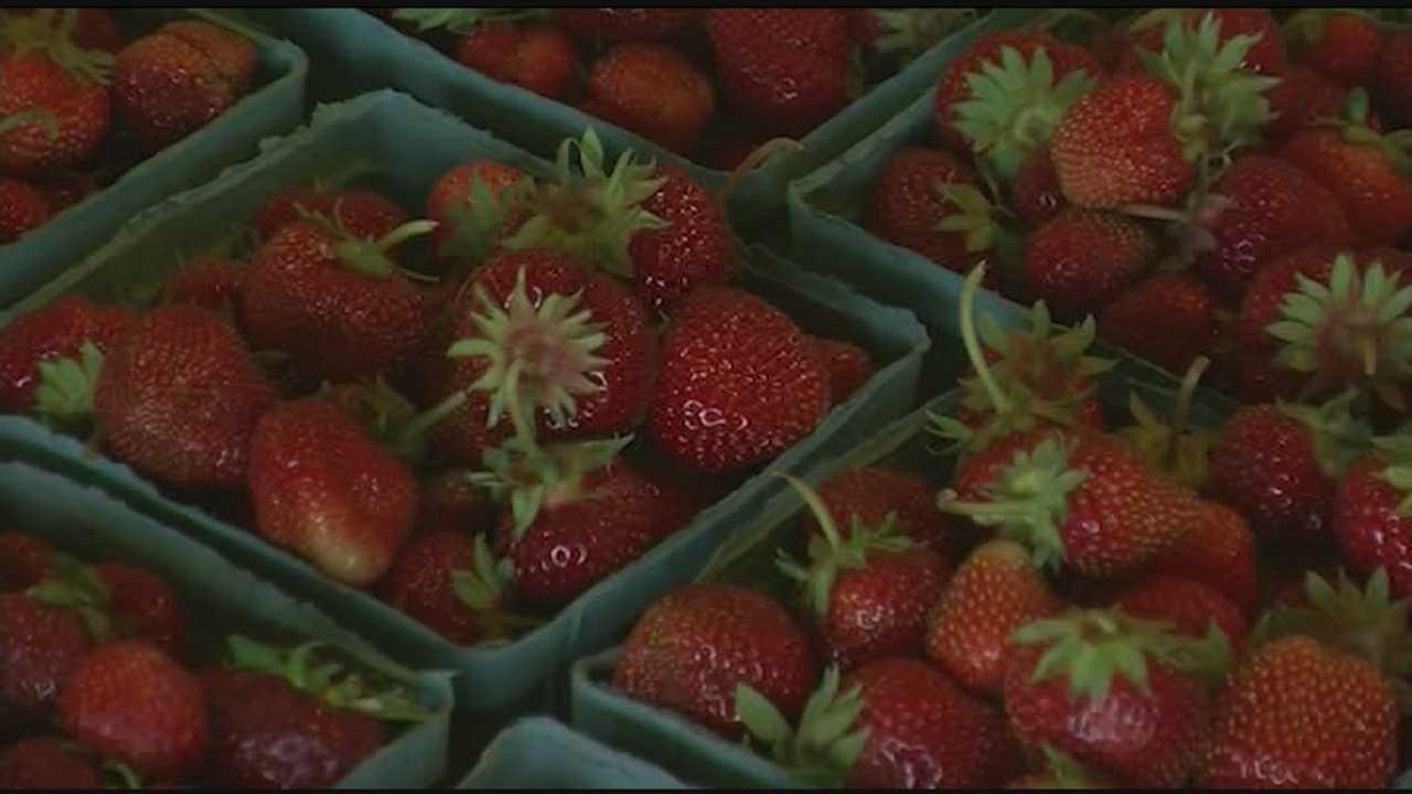 06-22-14 Rulfs U pick berries - img