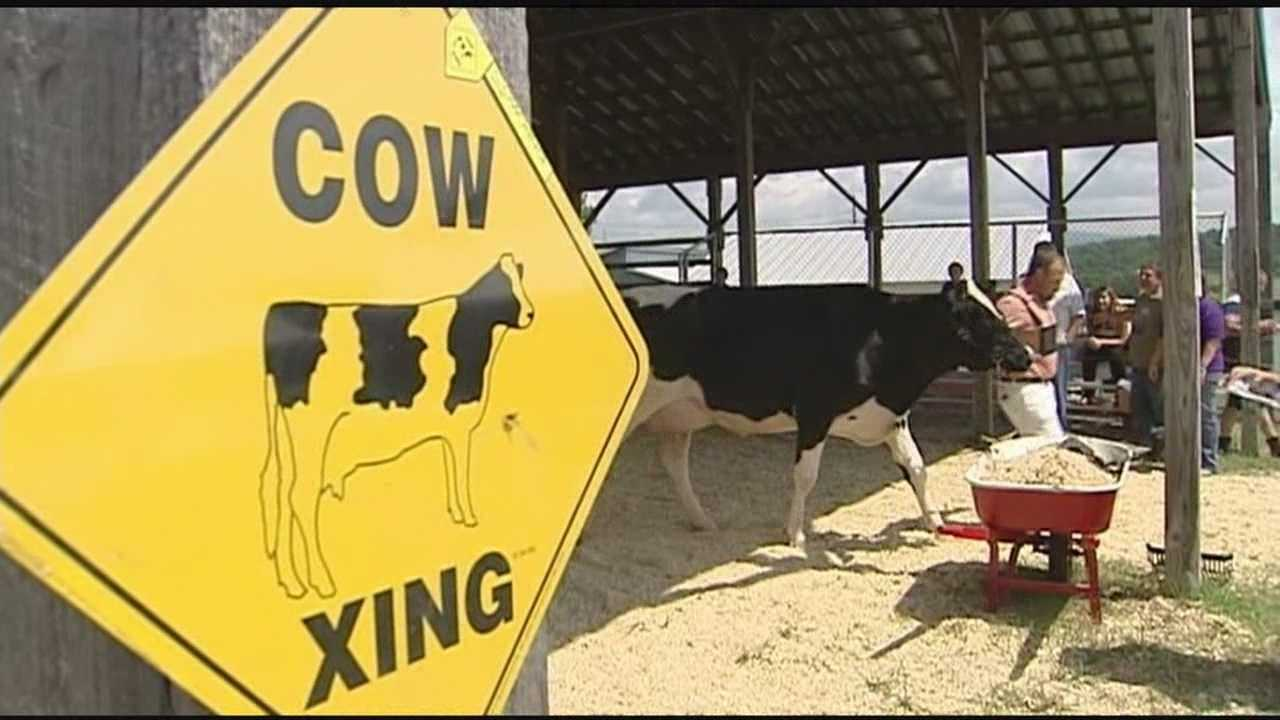 Dairy farms expected to increase profits