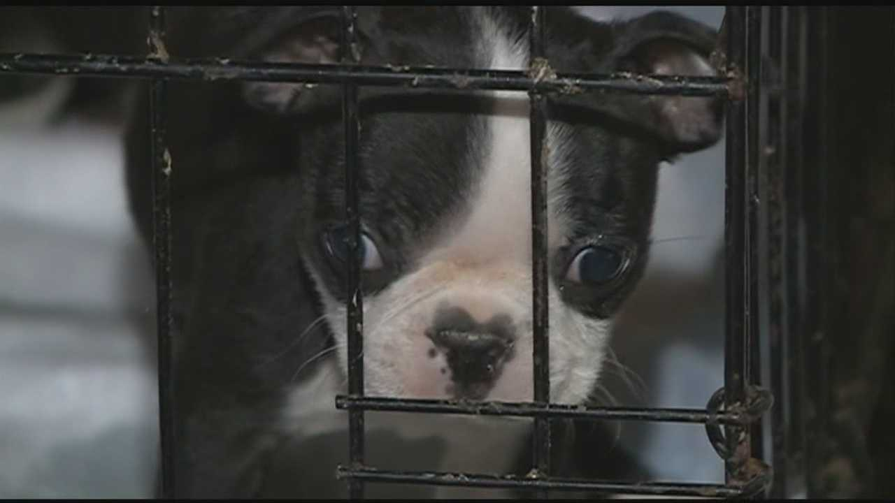 Dog owners warned about parvovirus