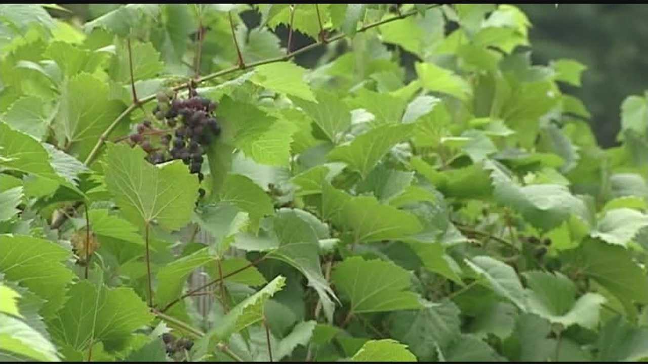 State makes exception due to poor growing conditions