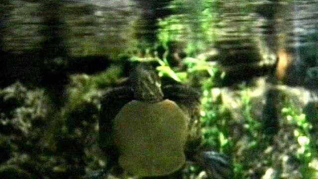 Behind the scenes at ECHO - Turtle