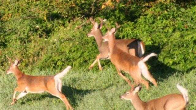 Deer Hunting Season - 14538477