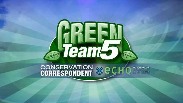 Green Team 5 - Conservation Correspondent
