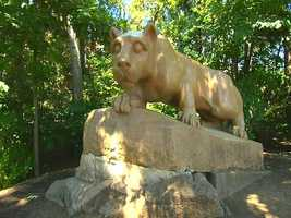 A statue of Penn State's mascot, the nittany lion.