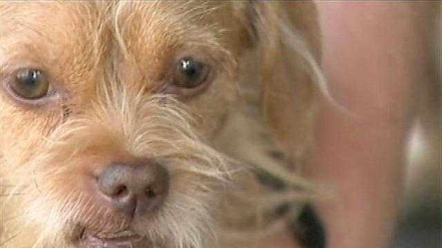 6 dogs poisoned in McKeesport