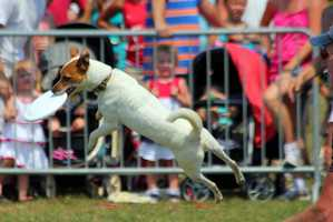 One of the most popular attractions Sunday was the Frisbee Dog Show, which featured several dogs playing catch in display of doggie tricks.