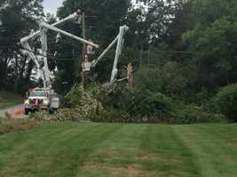 Trees came down and brought power lines with them.