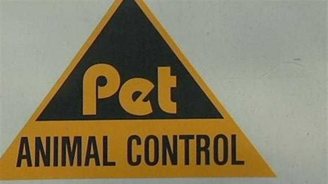 Triangle Pet