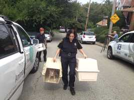 Pittsburgh police Officer Christine Luffey removes cats from a house in Carrick.