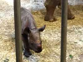The Pittsburgh Zoo & PPG Aquarium has a new baby rhinoceros.