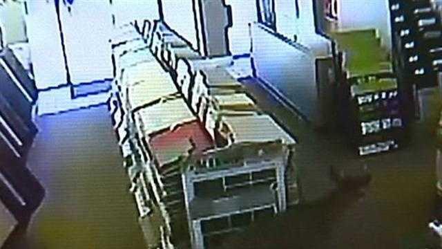 surveillance video: deer in carpet store