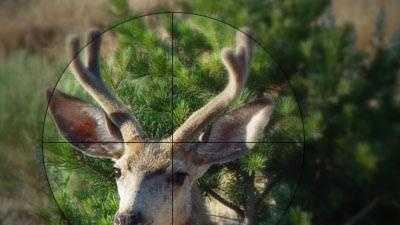 hunting (generic) deer