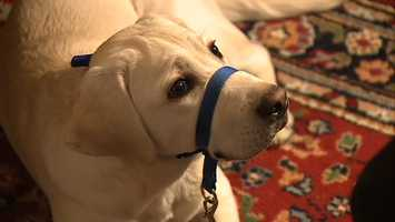 Hrach, who recently became a member of the national board for Canine Companions, said 135 people and 57 dogs will be a part of their group.