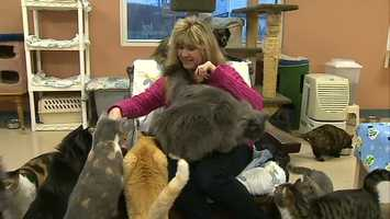 In the 20 years since then, the nonprofit Pet Connection adoption and rescue center on Sunrise Lane in Avonmore has grown to be able to house as many as 200 cats.
