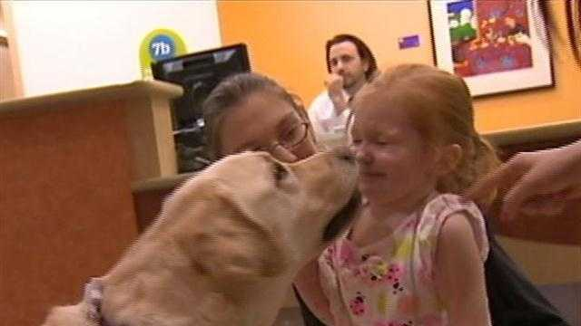 img-Healing Pets