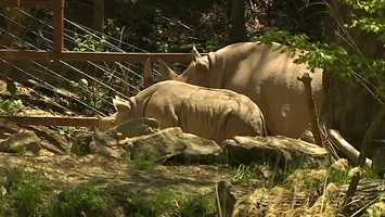 She was named after zoo supporter Janine Dillon Fragasso. The baby rhino was born on the same day Fragrasso and her husband were married.