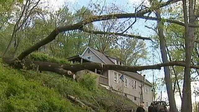 img-oak tree falls at Ross Twp home