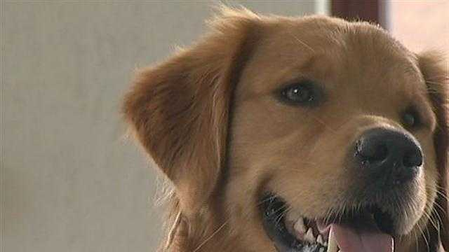 Local Man's Dog Inspires Worldwide Phenomenon