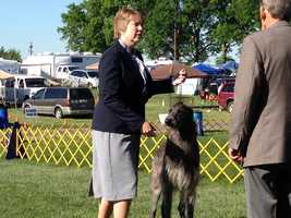 She won with Vinnie. He is on his way to becoming a Champion. She is a new owner/handler.