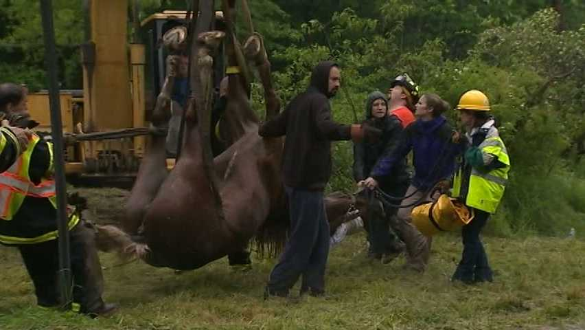 Murrysville horse rescue