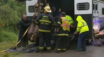 Firefighters assisted vets in the rescue, which included tying belts to the animal and lifting her using a track hoe. Officials believe they know the owner of the horse and will contact the owner about retrieving the animal.