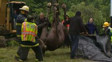 """Bramson said the horse could have been trapped for hours, possibly even overnight. She added that the animal """"wasn't in great condition"""" and would be examined by equine veterinarians."""