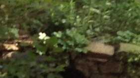 img-bear sighting (cropped)