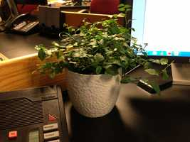 BONUS>>> Matt is the only person in the WTAE newsroom to keep a real plant on his desk (though he wonders how it survives considering how much he forgets to water it!