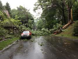 A tree fell on Pilgrim Road in Rosslyn Farms.