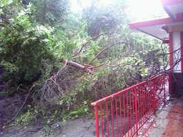 A tree fell at the McDonald's restaurant on Route 286 in Plum.