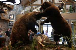Once inside, customers are greeted by two brawling bears.