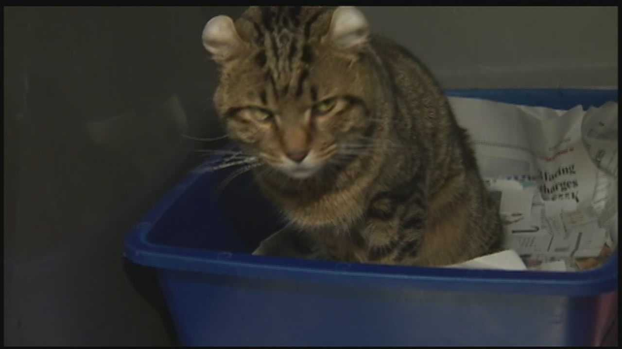 Dead animals found at foreclosed home in Hempfield Township