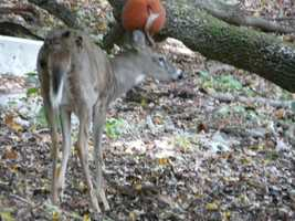 "Andy Kovac spotted this ""three-pointer"" in his backyard in Bethel Park on Wednesday."