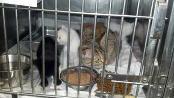"""These weren't stray cats. They were somebody's cat and kittens,"" ARL executive director Dan Rossi said. ""They seemed to be healthy, although they didn't have any food or water in the box."""
