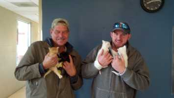 The construction workers brought the cat and kittens to the Animal Rescue League.